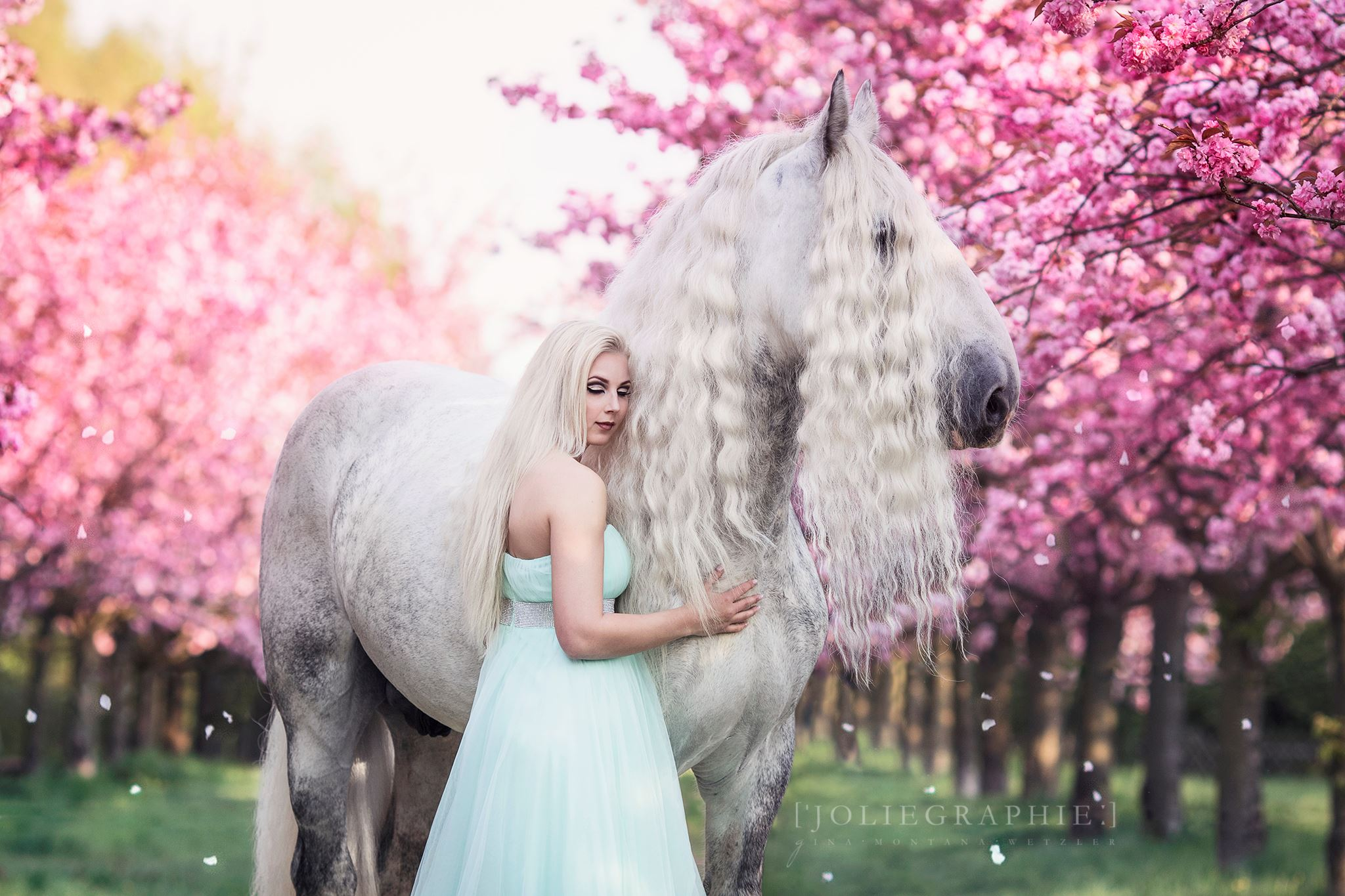 Berlin Shire Horse Upper Delves James mit Model Alina
